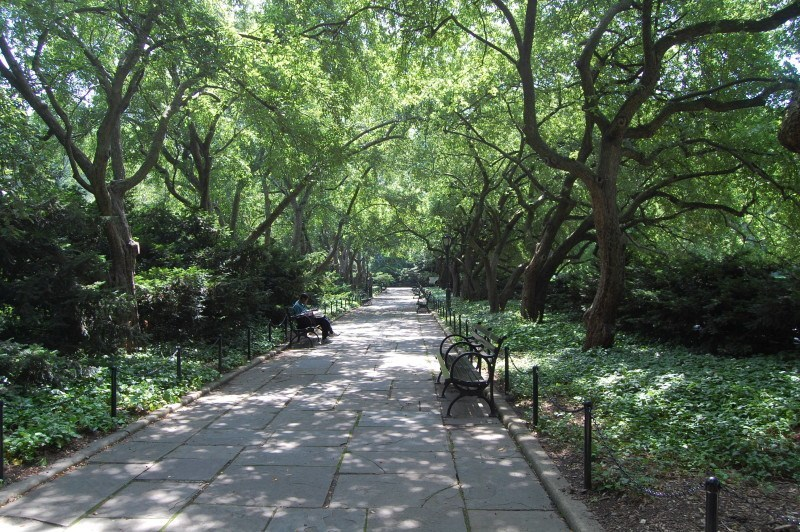 crabapple allee at CP