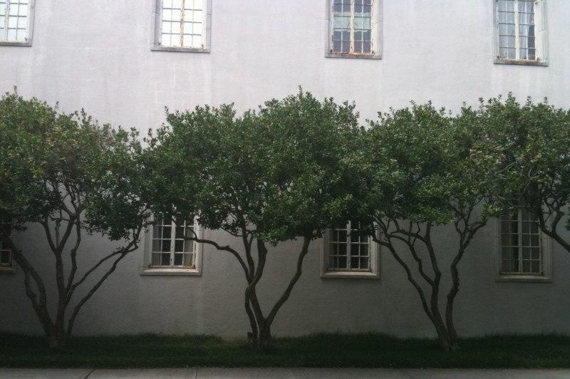 trees on side
